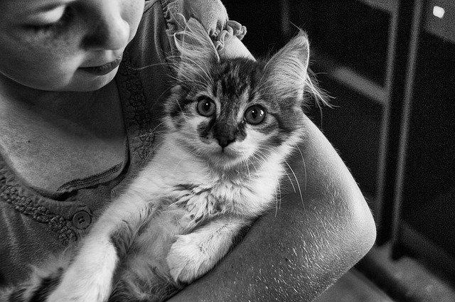 chování kočky